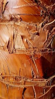 Casca áspera de palmeira. formas geométricas, estrutura, textura.