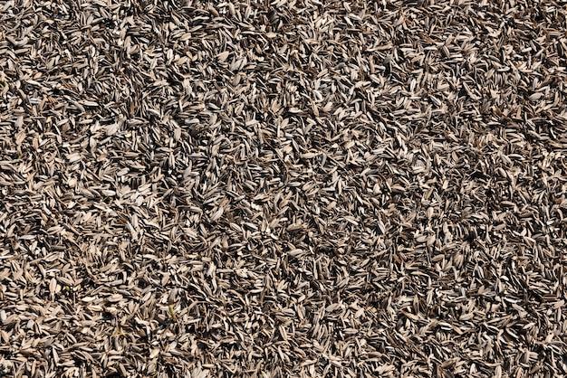 Casca de arroz seca velha no chão iluminado pela luz solar.