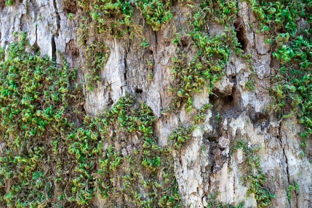 Casca de árvore coberta com close-up de musgo. foto de alta qualidade