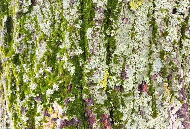 Casca de árvore com musgo e líquenes