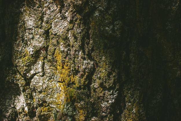 Casca de árvore com musgo perto de tiro