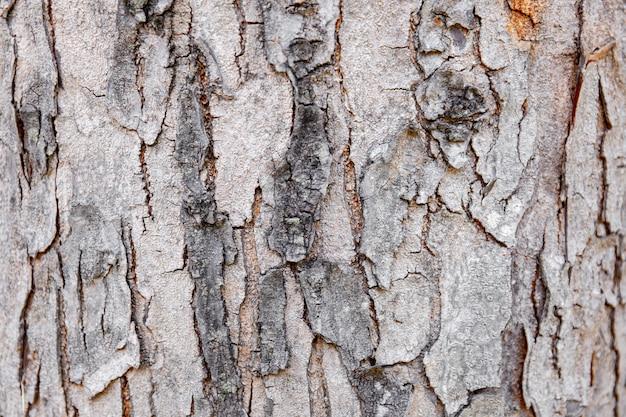 Casca de árvore de close-up de madeira rachada