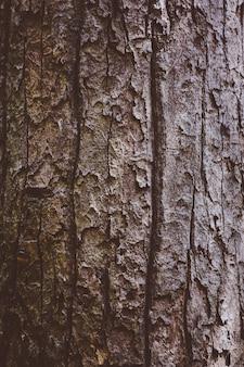 Casca de árvore na floresta natureza fundo