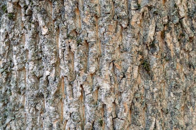 Casca de árvore seca com rachaduras e fundo de musgo close-up