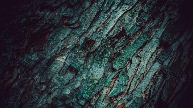 Casca de árvore texturizada para o fundo