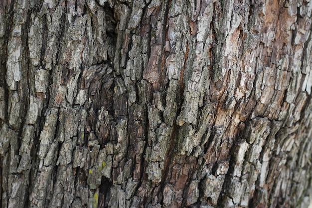 Casca de madeira velha textura de árvore padrão de fundo