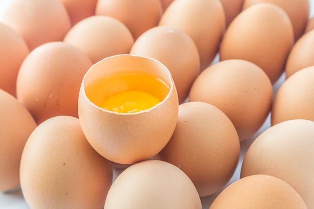 Casca de ovo granja de animais frango amarelo fresco