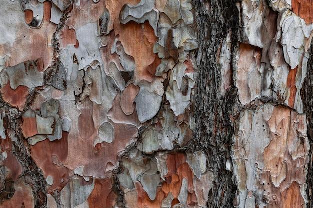 Casca de pinheiro com vestígios de fogo, (pinus canariensis), pinheiro endêmico das ilhas canárias, textura estreita vista de tronco