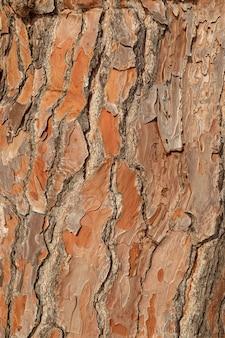 Casca de pinheiro de textura, tiro detalhado.