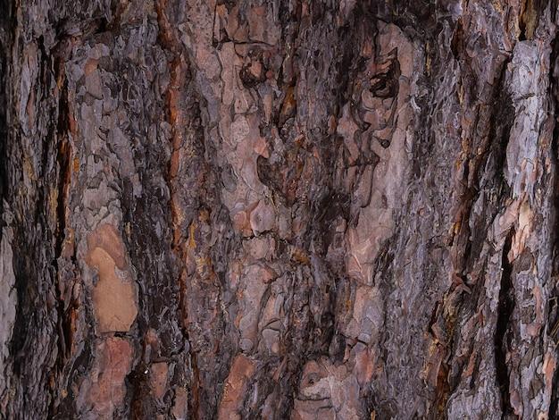 Casca de pinheiro, textura abstrata marrom, fundo escuro de madeira natural