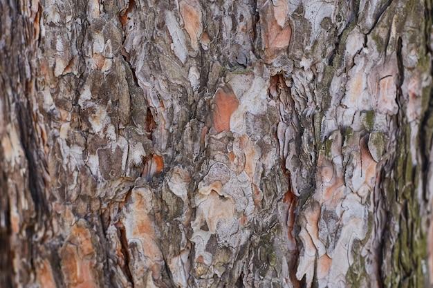 Casca de um grande close-up da árvore. fundo, textura