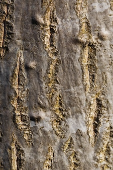 Casca de uma árvore, tronco, textura, vertical