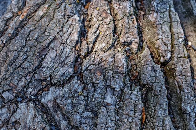 Casca de uma árvore.
