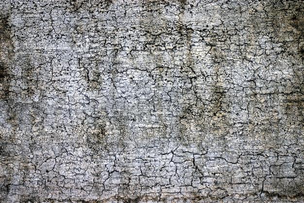 Casca de uma velha árvore