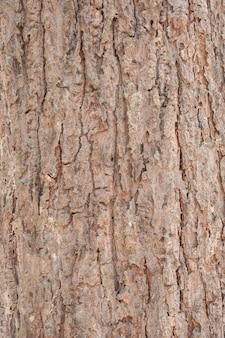 Casca rachada de uma árvore