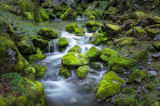 Cascata cai sobre rochas cobertas de musgo