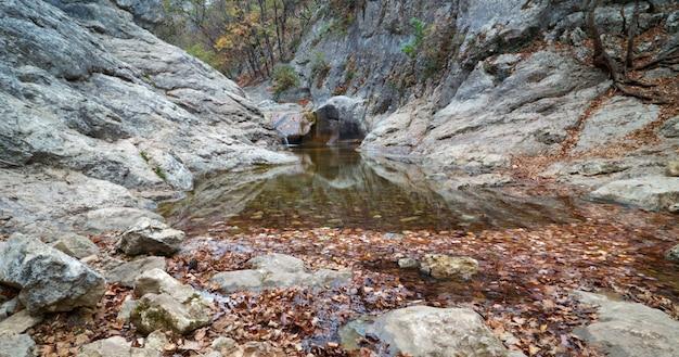 Cascatas em um riacho claro em uma floresta