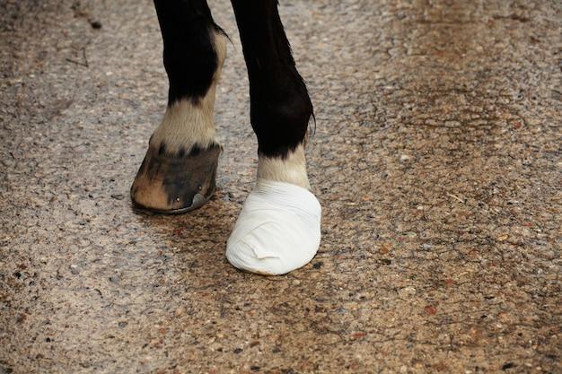 Casco de cavalo