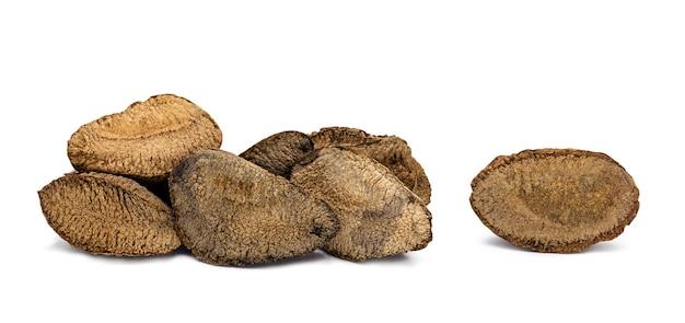 Castanha-do-pará com casca no fundo branco, castanha-do-pará típica