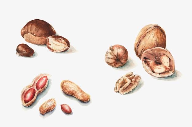 Castanhas de amendoim inteiras e meias nozes