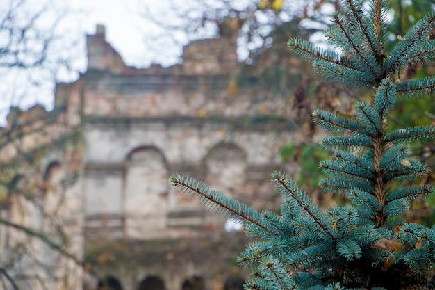 Castelo antigo do onn do abeto de pombo. ostrog, ucrânia