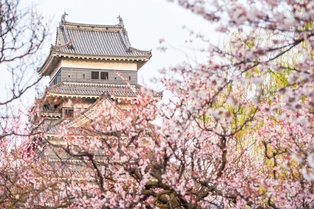 Castelo de matsumoto com flor de cerejeira
