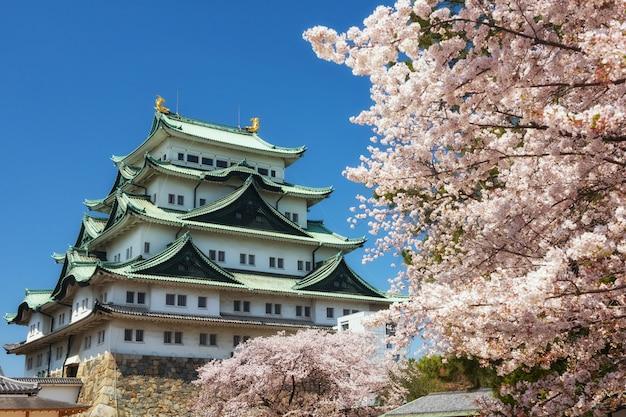 Castelo de nagoya com flor de cerejeira na primavera