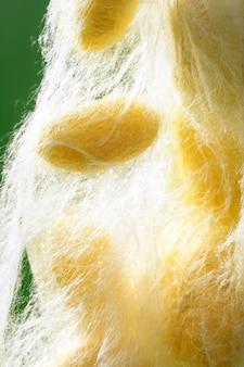 Casulo de bicho da seda amarela sobre o verde