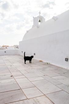 Catarata negra andando em telhados de casas brancas