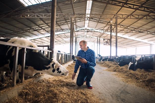 Cattleman segurando um tablet e observando animais domésticos para a produção de leite