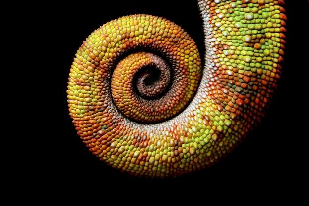 Cauda camaleão colorida bonita