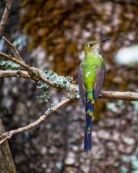 Cauda verde pássaro longo