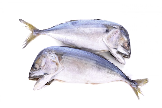 Cavala peixe isolado no branco