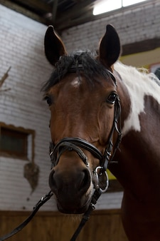 Cavalgando. retrato de um cavalo em uma caneta.