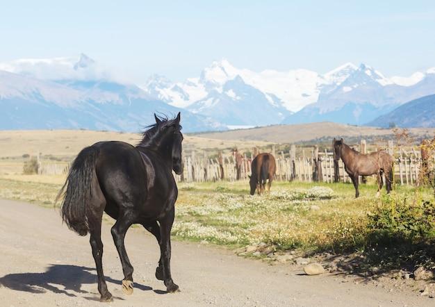 Cavalo a pasto no chile, américa do sul