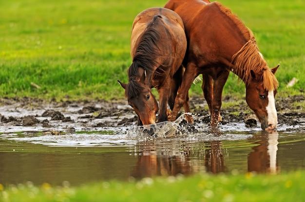 Cavalo a pasto no verão