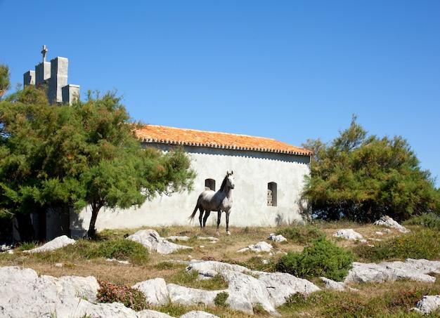 Cavalo branco ao lado da igreja