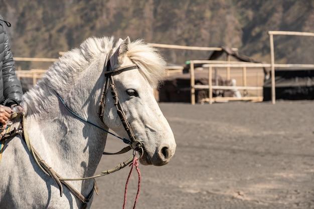 Cavalo branco com cavaleiro para atividade andando no deserto