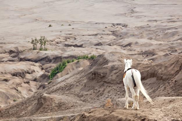 Cavalo branco contra deserto