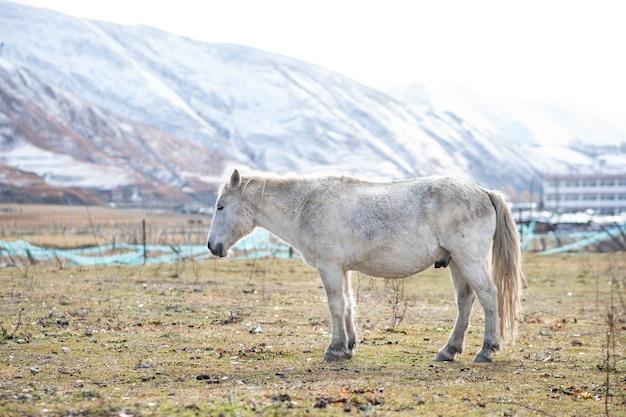 Cavalo branco e montanha de neve