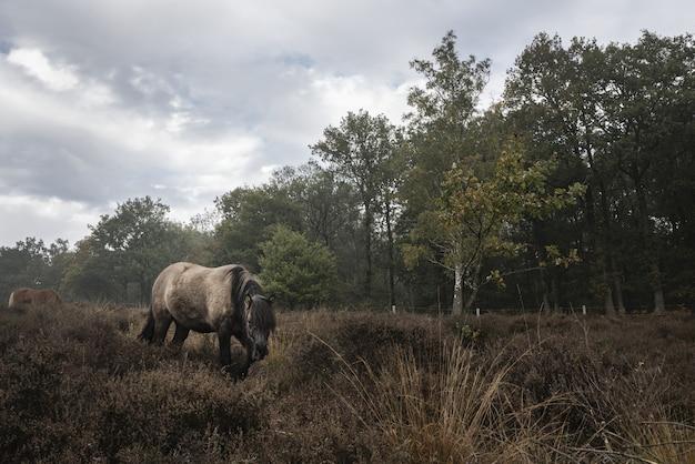 Cavalo caminhando em um campo em um dia sombrio