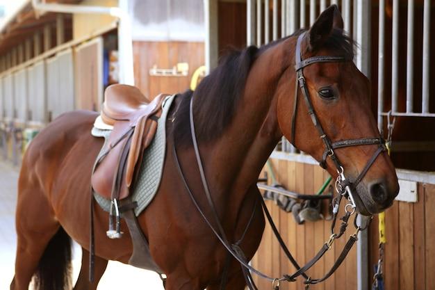 Cavalo castanho com sela e rédeas