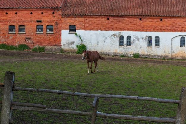 Cavalo castanho corre galope em um campo de primavera e verão