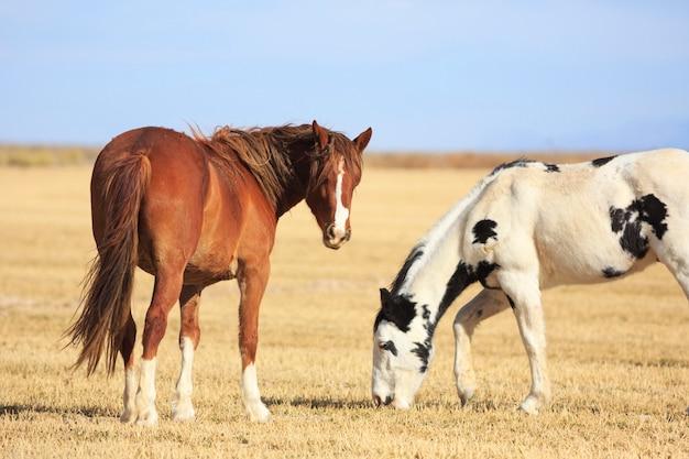 Cavalo castanho e cavalo malhado