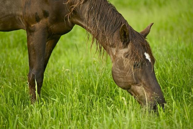 Cavalo com grama
