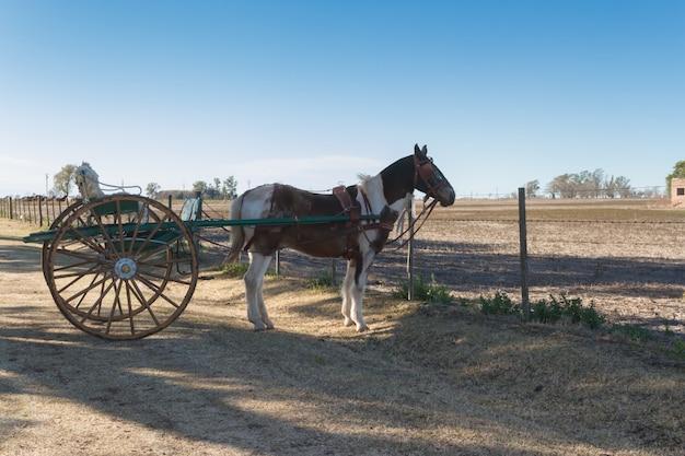 Cavalo com sulky no pampa argentina