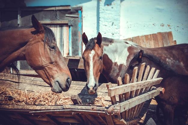 Cavalo com três focinhos comendo carroças de feno, filtro vintage