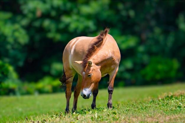 Cavalo comendo em seu pasto muito calmo