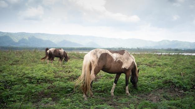 Cavalo comendo no gramado montanha céu azul