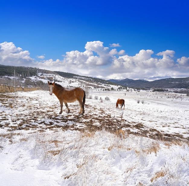 Cavalo de aldeia de neve virgen de la vega em teruel a espanha